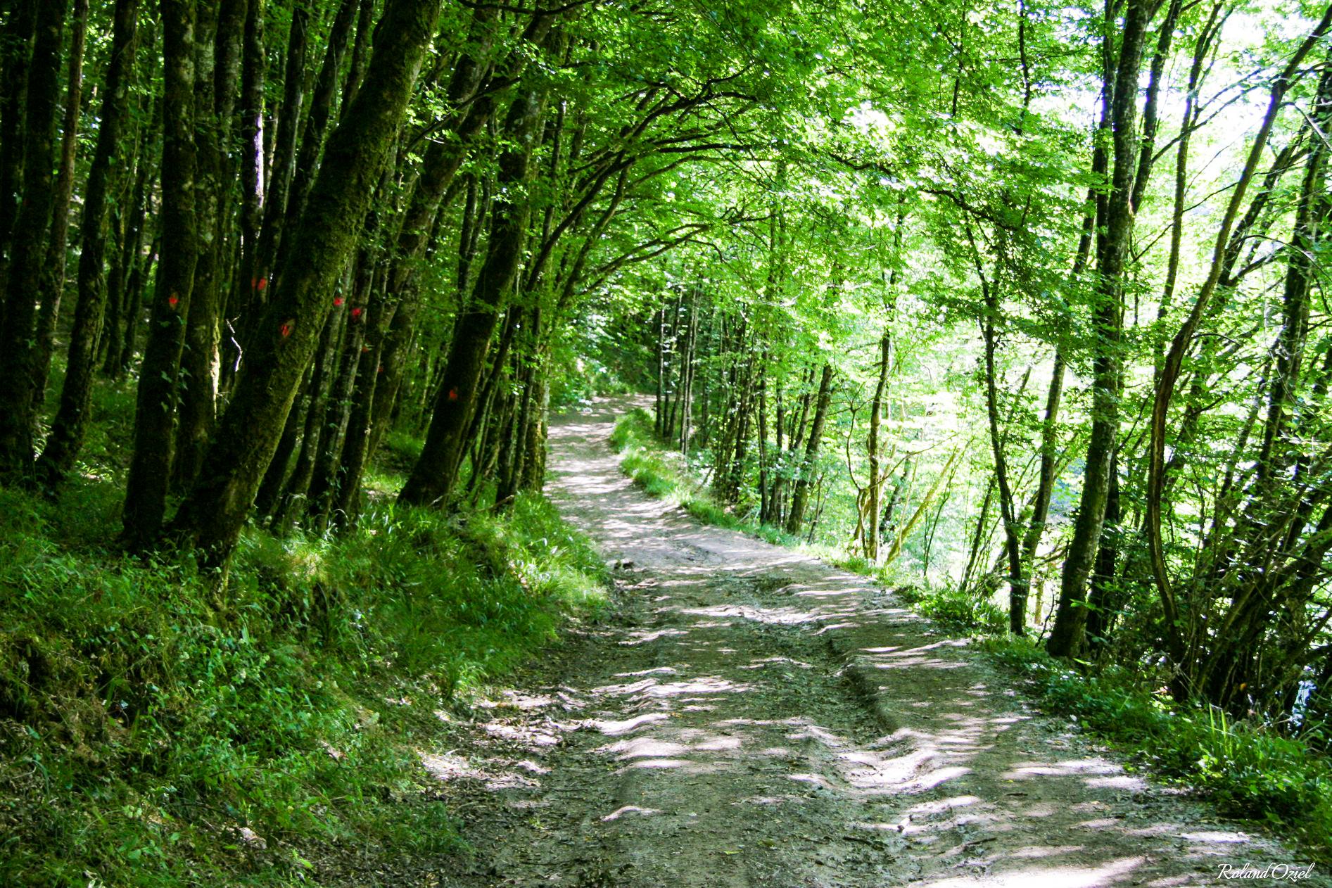 Nature sauvage au coeur de la forêt de Mervent