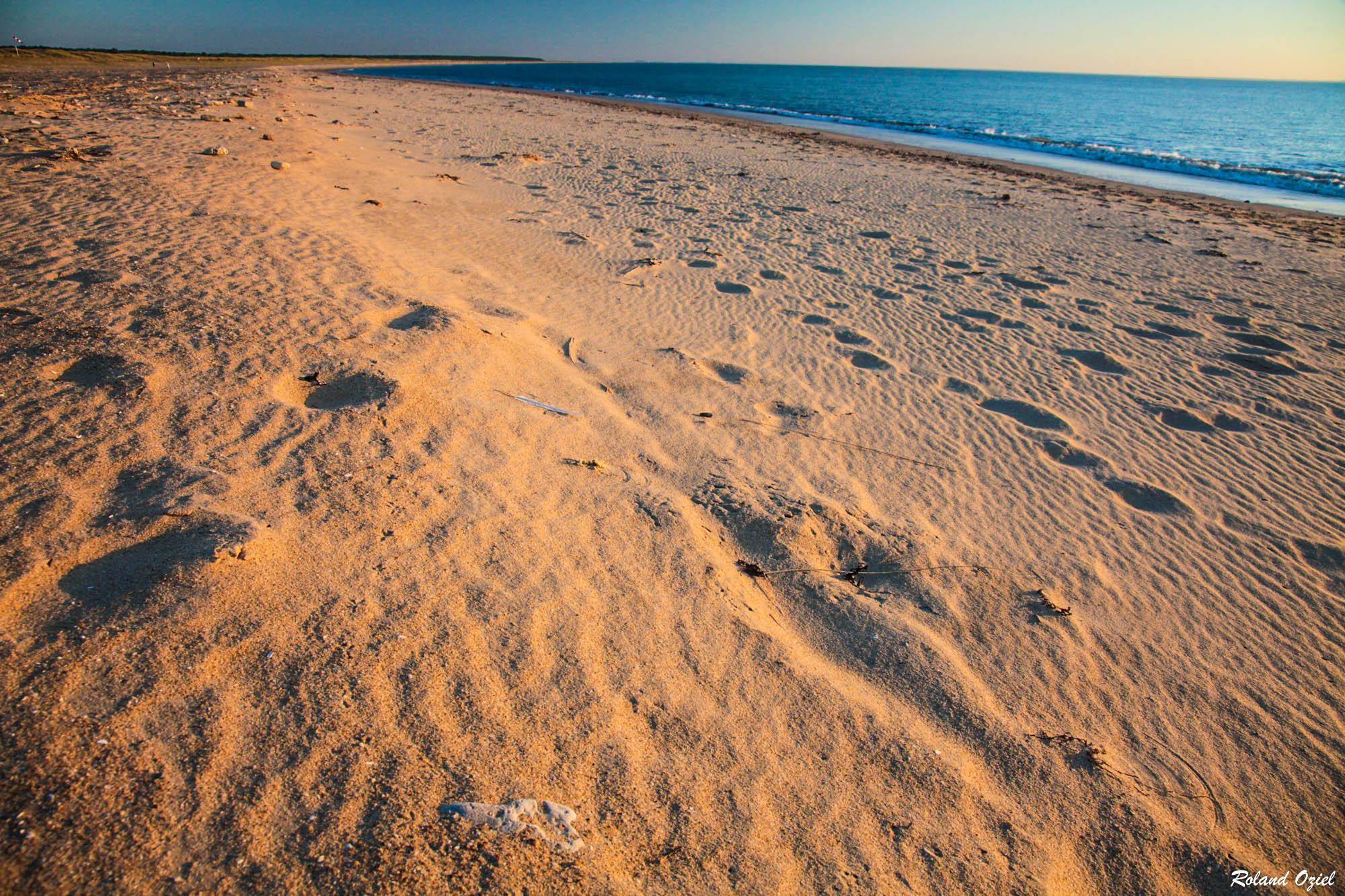 grande plage de la Faute sur Mer