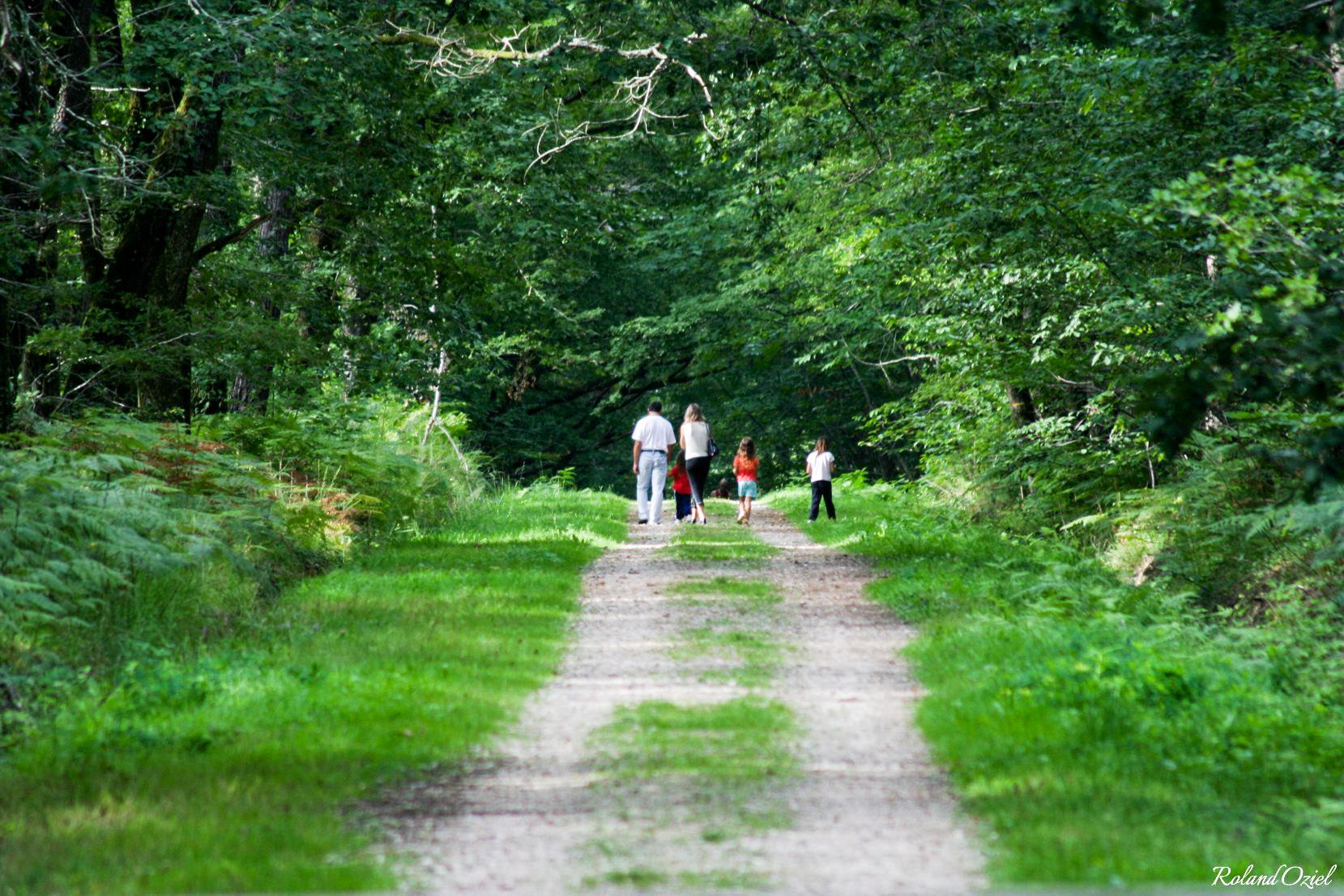 Randonnée dans la forêt de Mervent