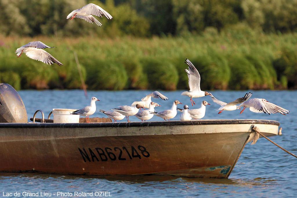 Camping Amoureux de la Nature en Vendée