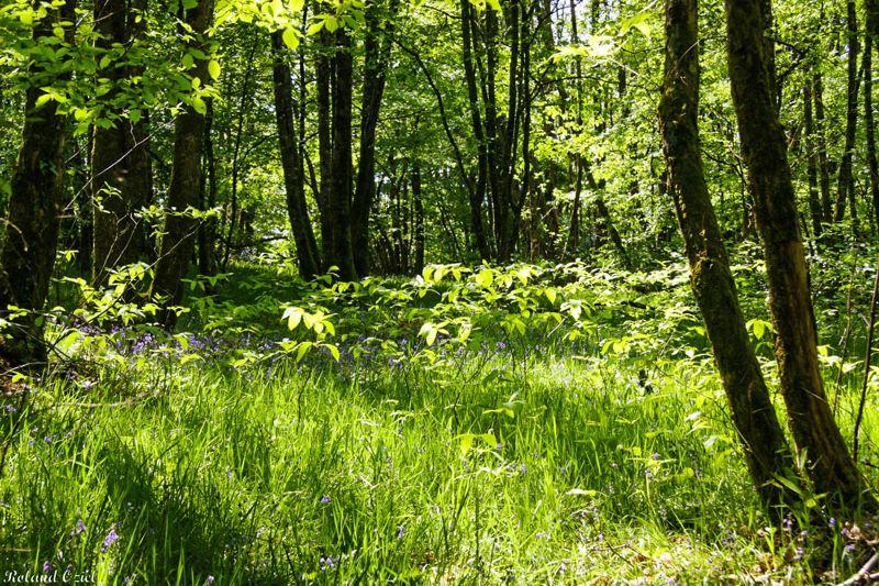 Camping dans le calme de la nature en Vendée