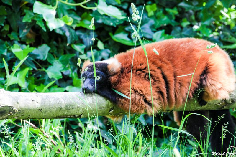 Camping proche parc animalier