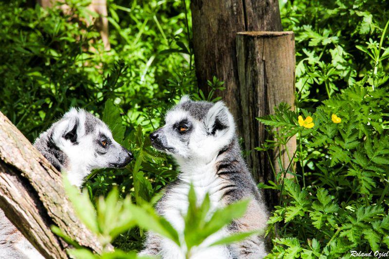 Camping avec parc animalier en Vendée